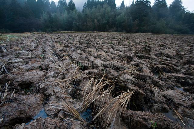冬の雨に濡れる荒起こしの田面の写真素材 [FYI03348135]