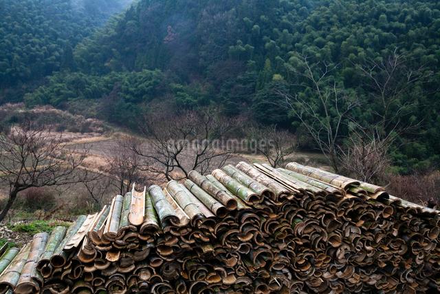 里山を侵食する竹材の活用の写真素材 [FYI03348138]