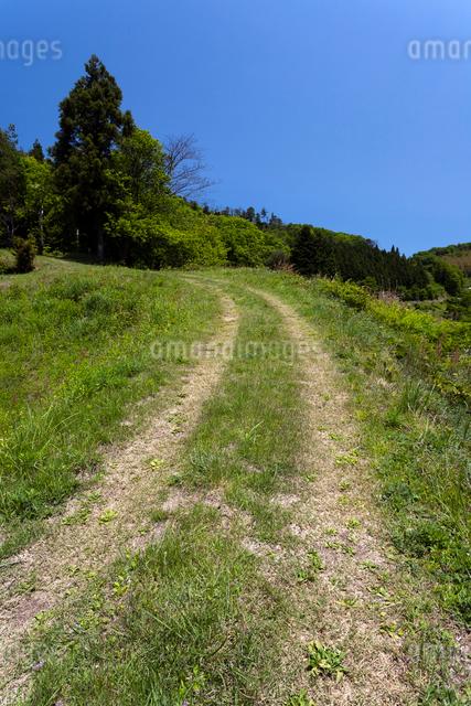 里山に続く轍道の写真素材 [FYI03348155]