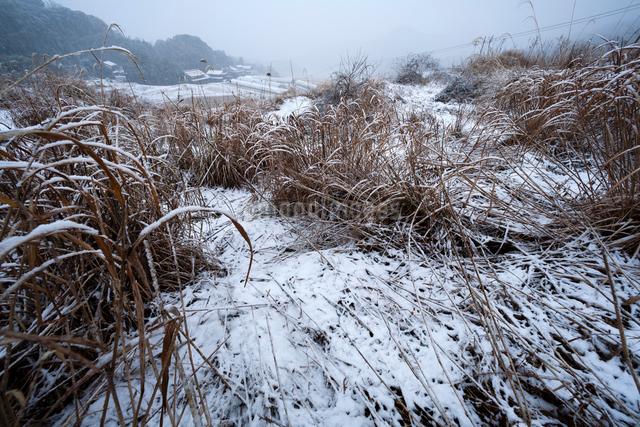 雪積もる耕作放棄地の棚田の写真素材 [FYI03348173]