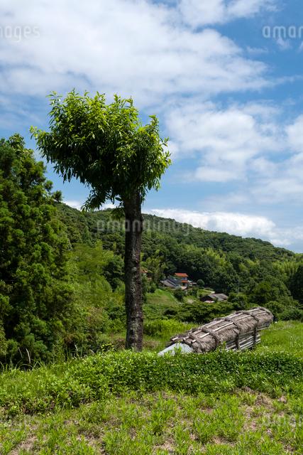 新緑の里山の写真素材 [FYI03348188]