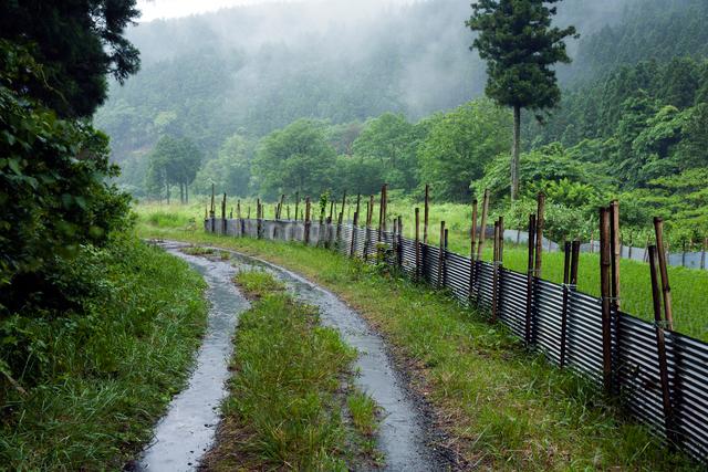 雨に濡れる轍の道と害獣除けのトタン柵の写真素材 [FYI03348191]