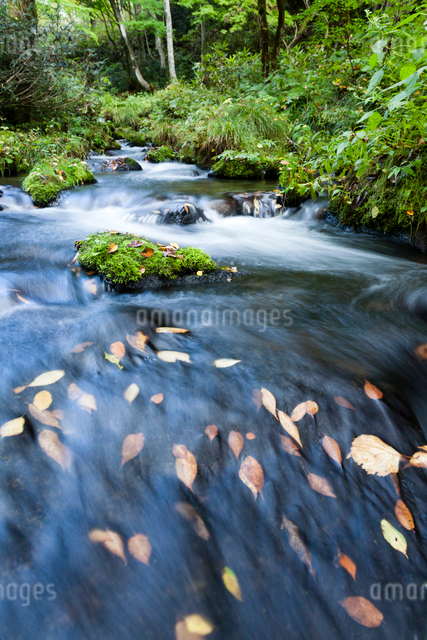 秋の木谷沢渓流の写真素材 [FYI03348208]