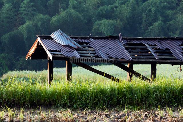 古びた稲架小屋のトタン屋根の写真素材 [FYI03348209]