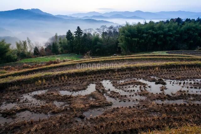 山腹の棚田と谷霧に浮かぶ山並みの写真素材 [FYI03348216]