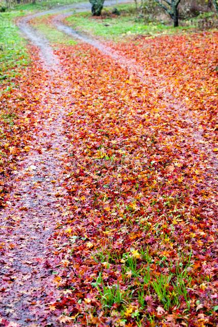 散り紅葉と轍の写真素材 [FYI03348222]