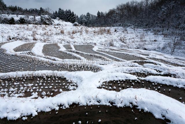 雪化粧する棚田の写真素材 [FYI03348226]