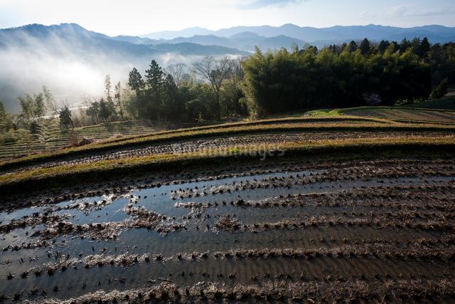 山腹の棚田と谷霧の写真素材 [FYI03348228]