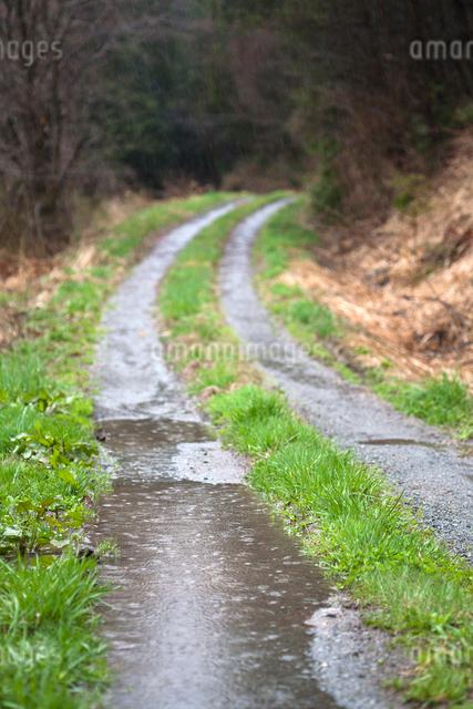 轍の水溜りと雨の写真素材 [FYI03348229]
