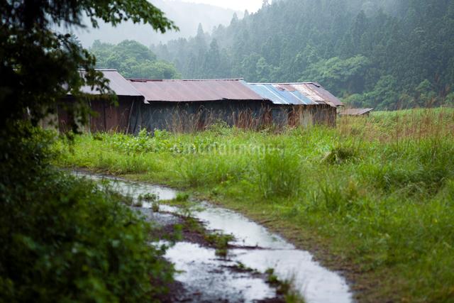 雨に濡れる轍の道と野中のトタン小屋の写真素材 [FYI03348234]