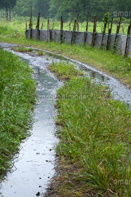 雨に濡れる轍の道と害獣除けのトタン柵の写真素材 [FYI03348242]