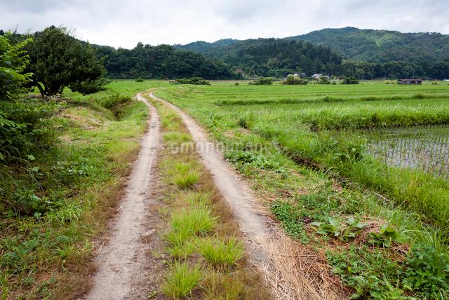 轍の道の写真素材 [FYI03348244]