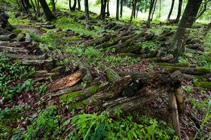 朽ちる榾木の写真素材 [FYI03348246]