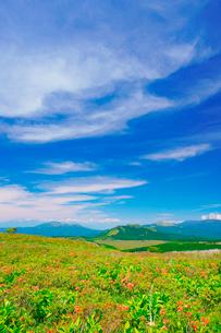 霧ヶ峰高原のレンゲツツジと北アルプスの山並みの写真素材 [FYI03348254]