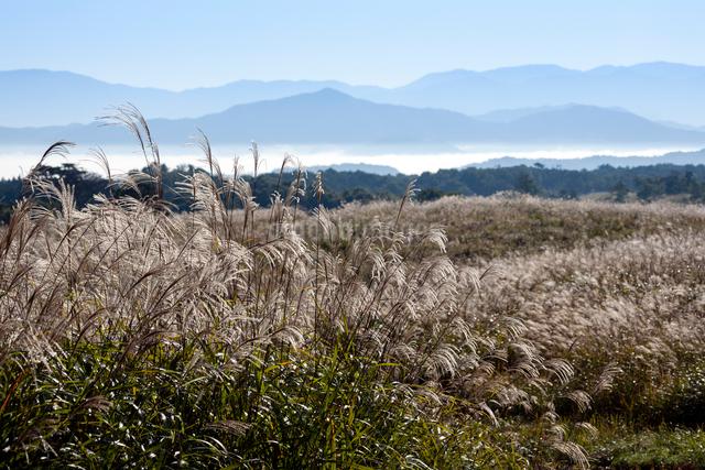 蒜山高原のススキ原と山並みの写真素材 [FYI03348265]