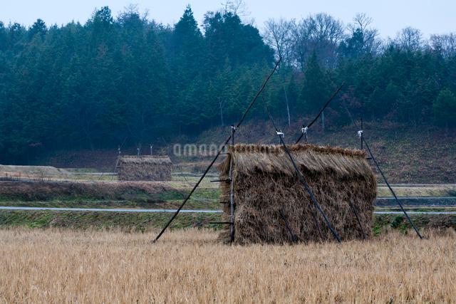 田面に並ぶ藁塚の写真素材 [FYI03348285]