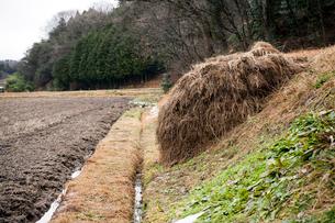 畦畔に積まれた刈り草の堆肥の写真素材 [FYI03348291]