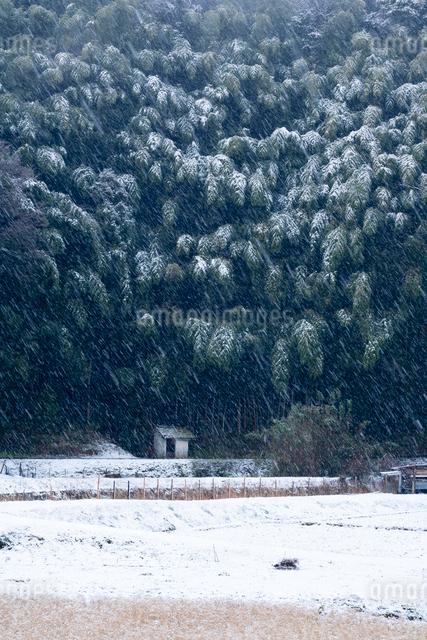 竹林に降りしきる雪と耕地の写真素材 [FYI03348292]