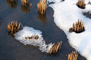 湿田の刈り株と氷雪の写真素材 [FYI03348294]