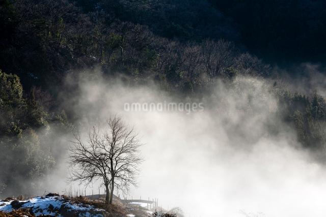 谷霧に浮かぶ冬ざれの木の写真素材 [FYI03348304]
