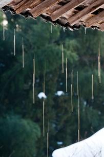 雪解けのしずくの写真素材 [FYI03348308]