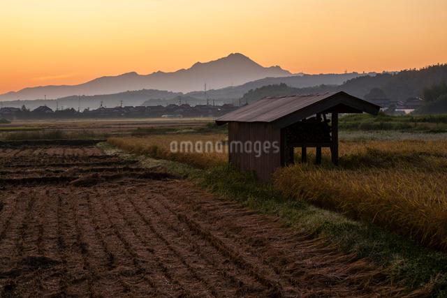 明け色に染まる耕地と伯耆大山の写真素材 [FYI03348311]