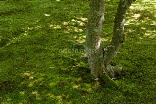 緑陰の木漏れ日の写真素材 [FYI03348327]