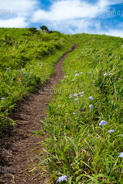 草原に続く山道の写真素材 [FYI03348328]