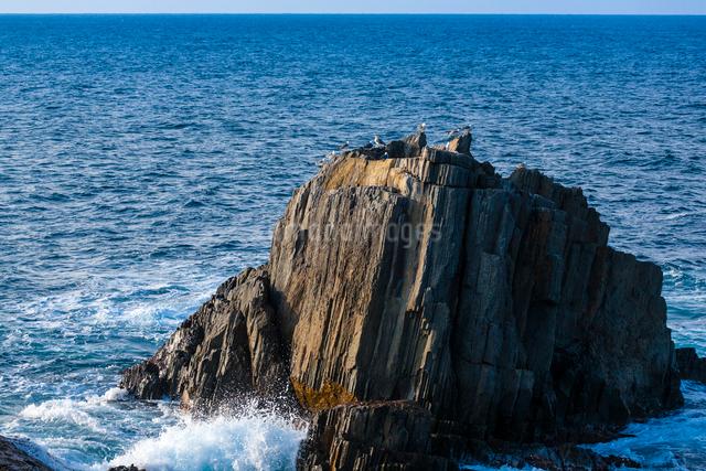 岩礁とウミネコの写真素材 [FYI03348330]
