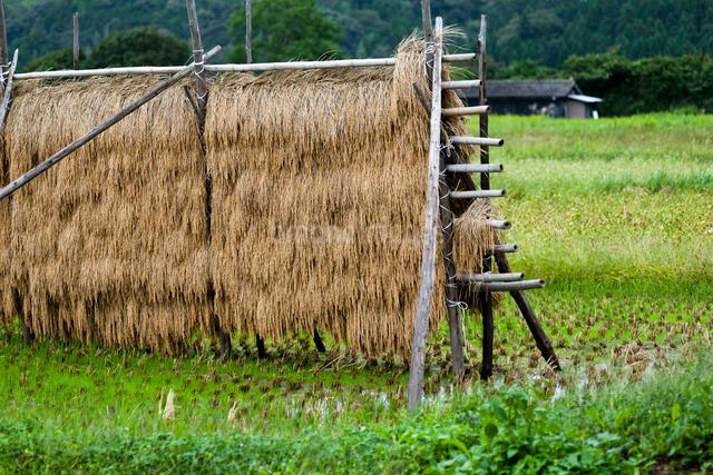 稲架と農小屋の写真素材 [FYI03348351]