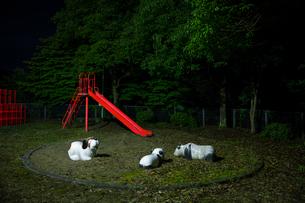 夜の公園の写真素材 [FYI03348495]
