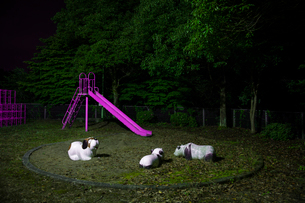 夜の公園の写真素材 [FYI03348496]