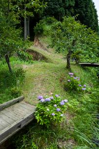 アジサイ咲く小道の写真素材 [FYI03348512]