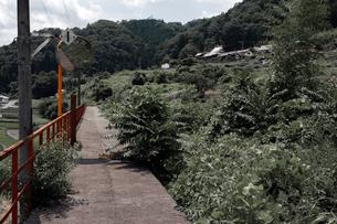 草しげる廃線のホームの写真素材 [FYI03348536]