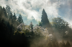 蒸気霧立ち昇る里山の写真素材 [FYI03348561]