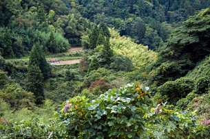 里山に囲まれた田んぼの写真素材 [FYI03348565]