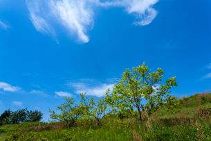 新緑と青空の写真素材 [FYI03348638]