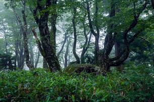 比婆山御陵の頂上にあるイザナミノミコトの墓陵の写真素材 [FYI03348751]