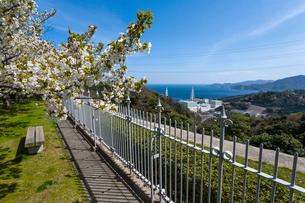 桜咲く島根原子力館の前庭から見る島根原子力発電所の写真素材 [FYI03348760]