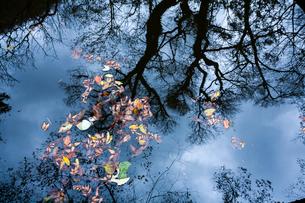 水面に映る樹影と落葉の写真素材 [FYI03348841]