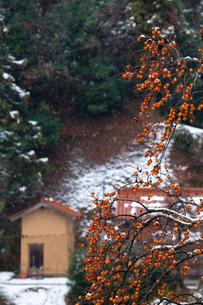 冬の渋柿と旧家の写真素材 [FYI03348849]