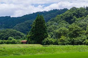 青田と小さな農小屋の写真素材 [FYI03348870]