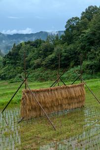 雨水貯まる棚田と稲架干しの写真素材 [FYI03348878]