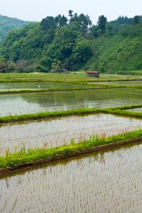 早苗植わる棚田と船林神社の写真素材 [FYI03348949]
