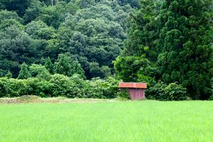 青田と小さな農小屋の写真素材 [FYI03348966]