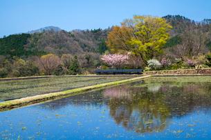 水張る棚田と里山の写真素材 [FYI03348992]