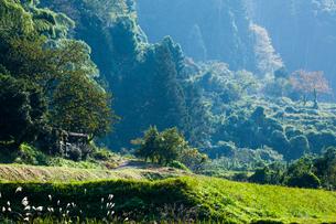 山間の道と里山の写真素材 [FYI03349036]