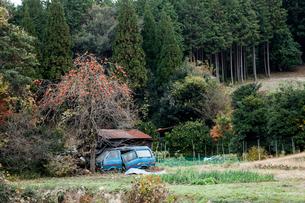 実る柿と廃車の写真素材 [FYI03349050]