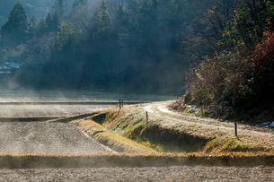 蒸気霧立ち昇る棚田と轍道の写真素材 [FYI03349053]