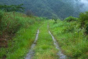 雨に濡れる轍道の写真素材 [FYI03349097]